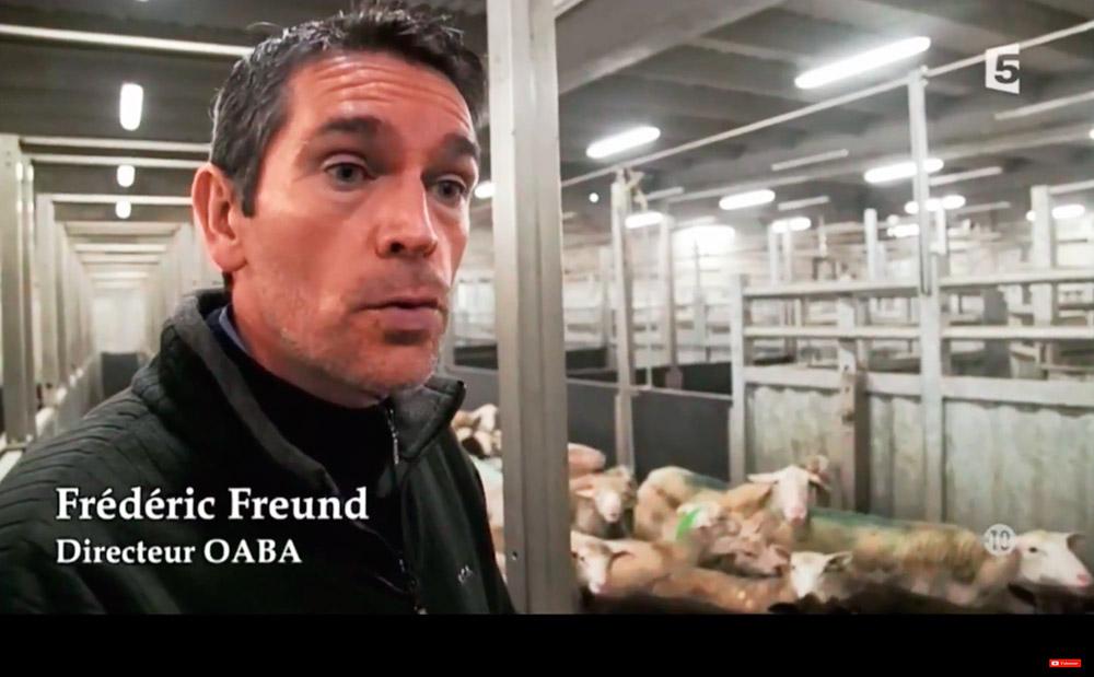 La fin de la souffrance animale? L'OABA visite un abattoir