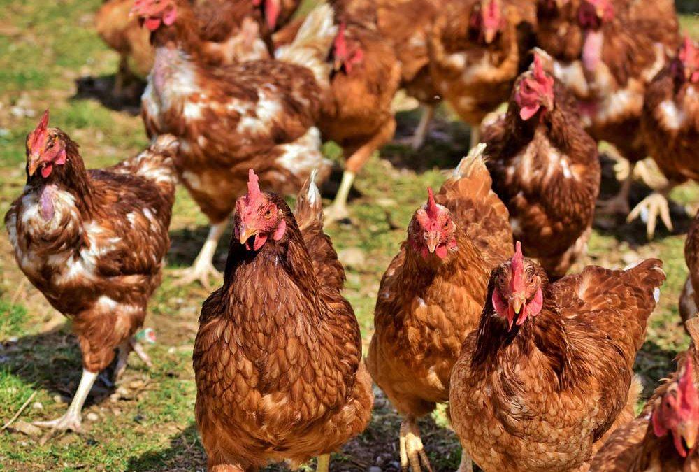 Étiquetage bien-être animal : 3 nouveaux acteurs rejoignent la démarche