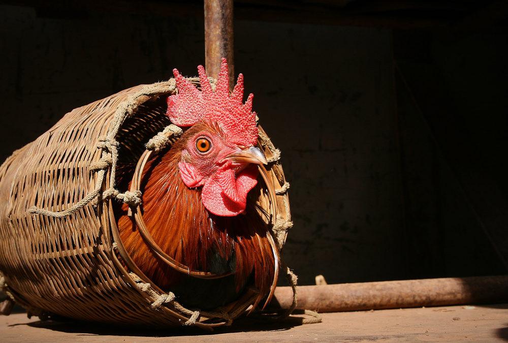 15 mesures pour le bien-être animal: où sont les «annonces fortes» promises?