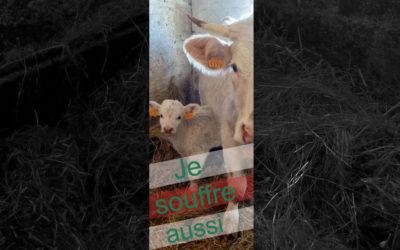 PÉTITION : POUR LE SAUVETAGE DES ANIMAUX DE FERME MALTRAITÉS