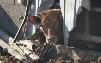 """315 animaux retirés de """"l'enfer"""" et confiés à l'OABA"""