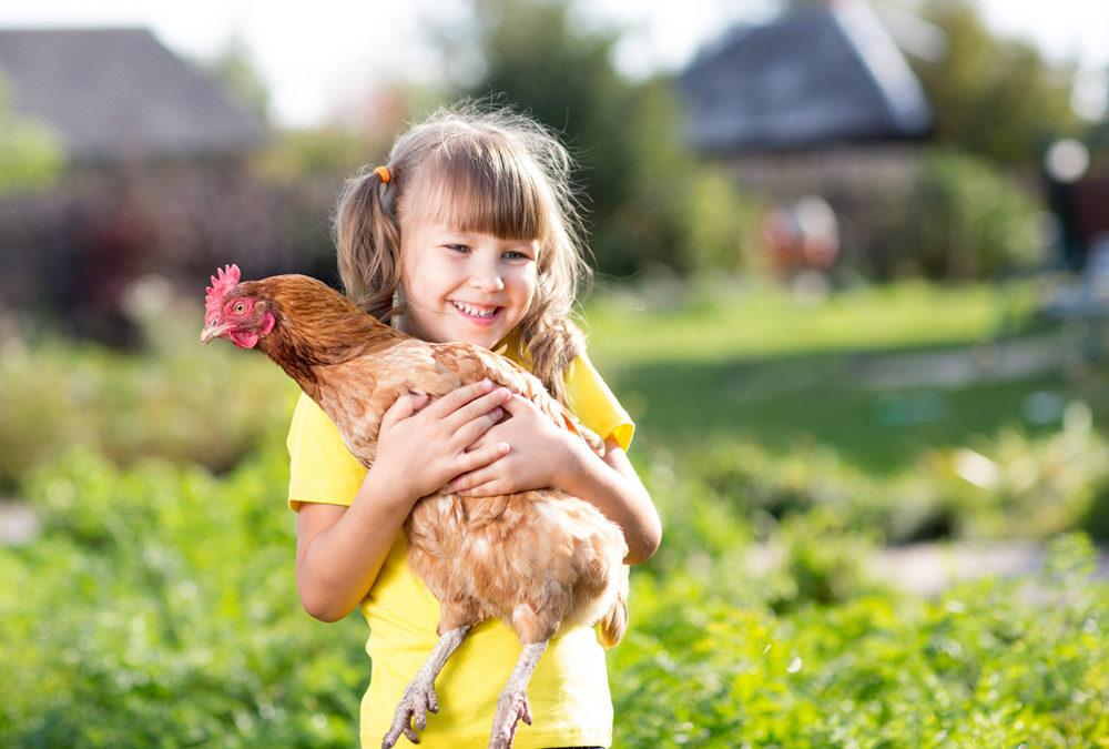 Adoptez et sauvez des poules