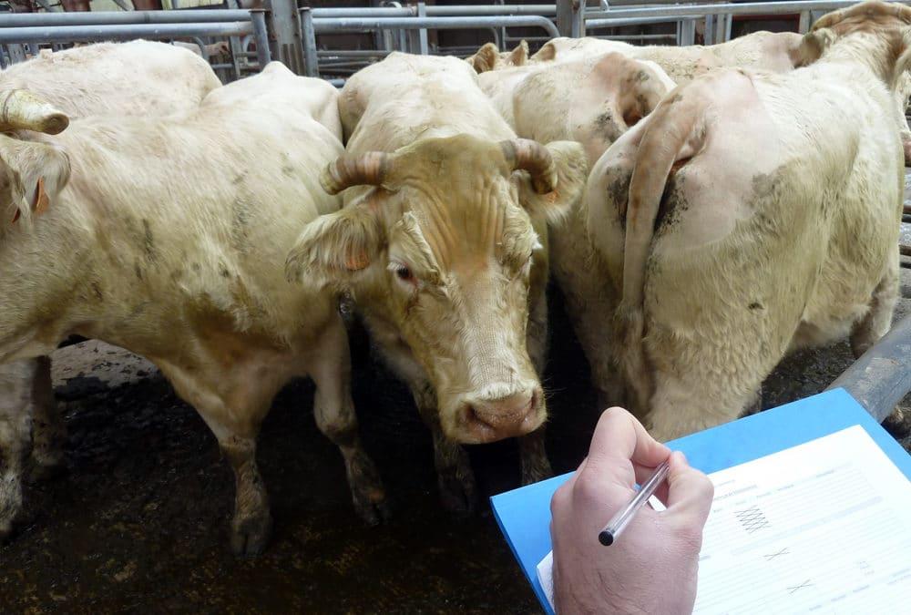 L'OABA, au secours des animaux de ferme depuis plus de 55 ans