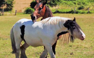 Nos animaux rescapés dans la Ferme du Bonheur normande