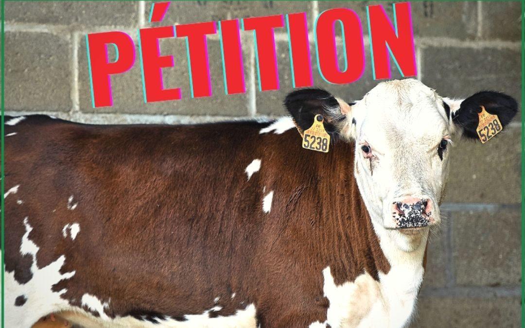 Dernière ligne droite pour le sauvetage des animaux de ferme maltraités