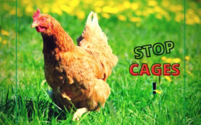ICE : Un grand pas vers la fin des cages