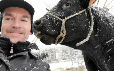 Saisie exceptionnelle de 350 vaches dans le Jura, deux frères condamnés