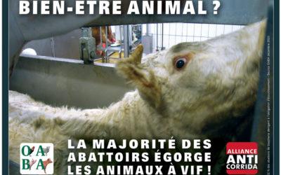 La plus horrible des maltraitances animales, on en parle ?