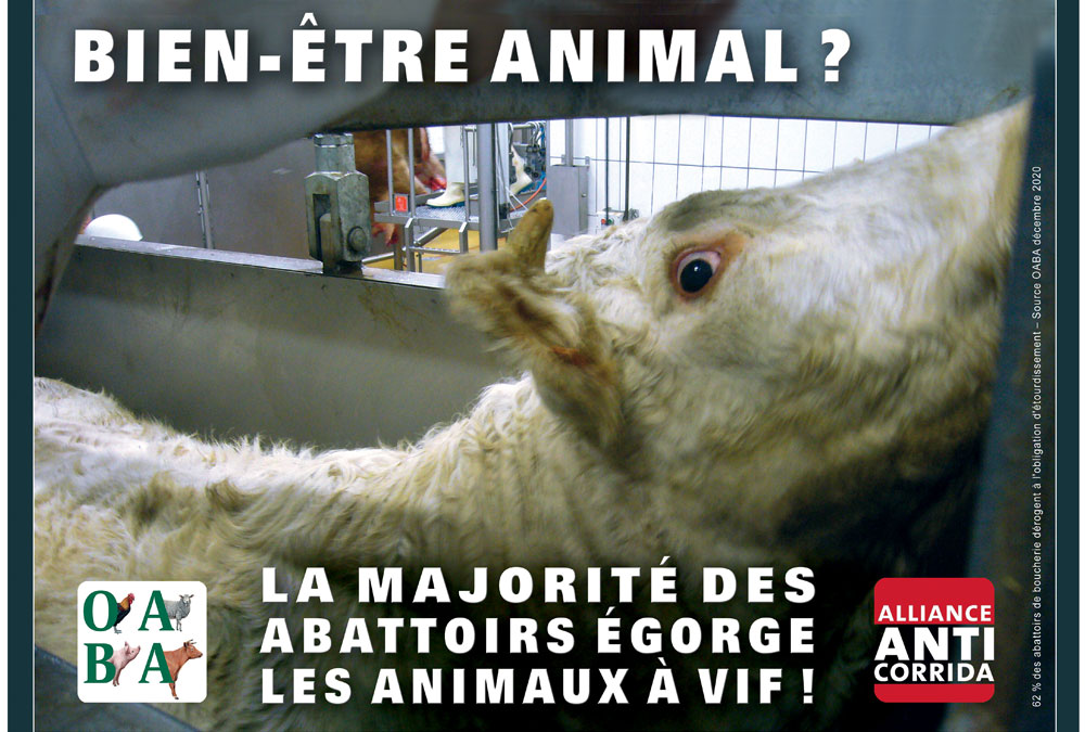 La plus horrible des maltraitances animales, on en parle ?