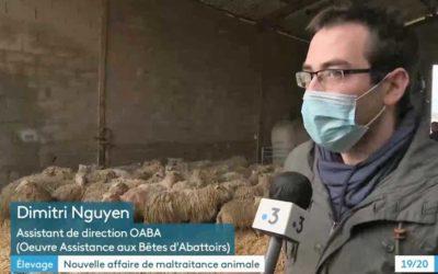 Maltraitance animale : cauchemar à la ferme
