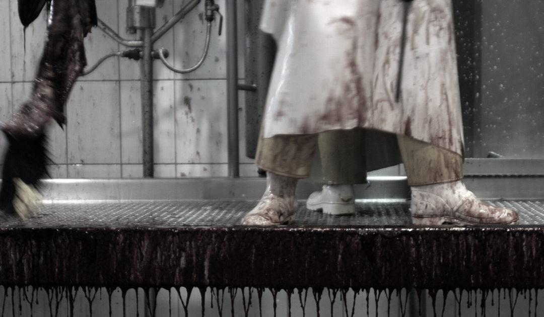 Pratiques en abattoirs : des tolérances inacceptables