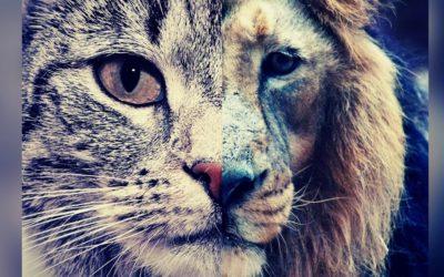 PPL Maltraitance animale : lettre ouverte au Gouvernement