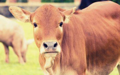 Des initiatives européennes sur l'étiquetage bien-être animal