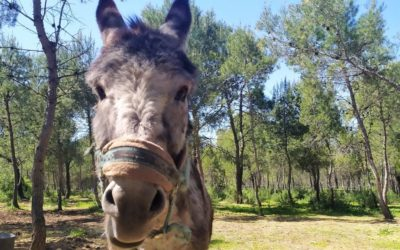 Interview – 60 ans au secours des animaux de ferme