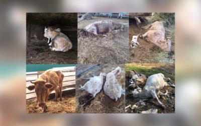 1er semestre 2021 : plus de 1000 animaux en péril saisis par l'OABA